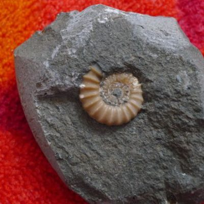 Fossil Hunting and a Fabulous Find!