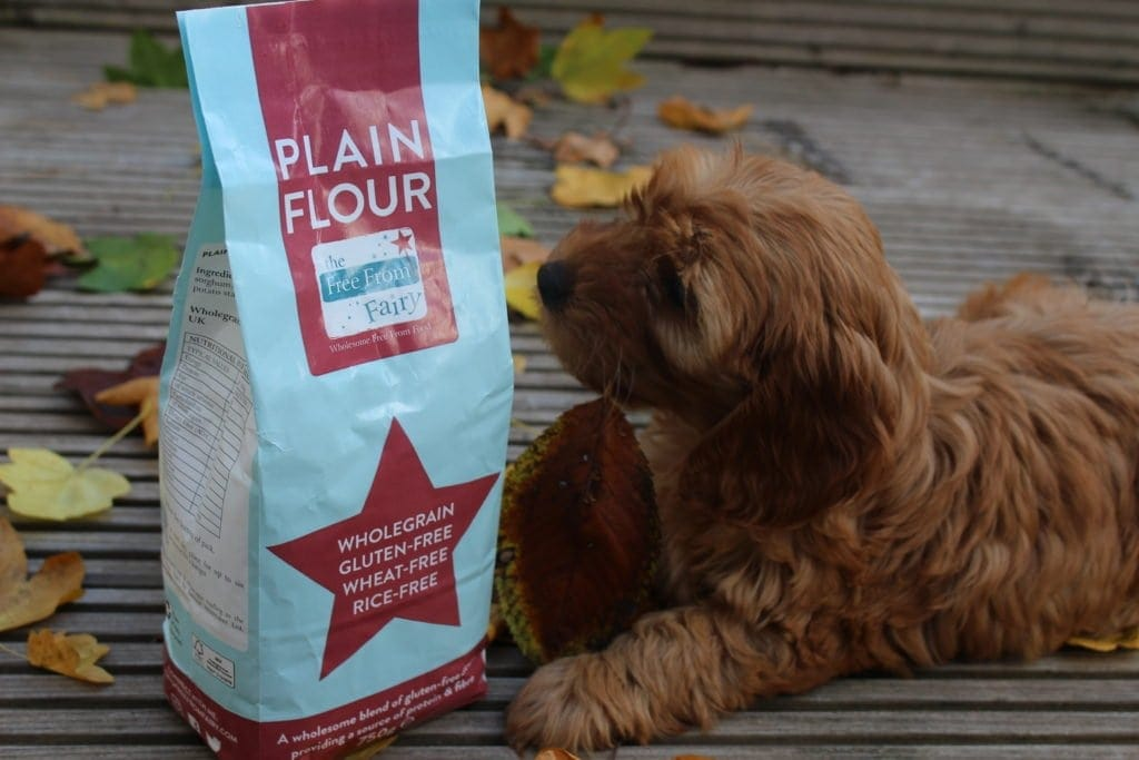 Minnie the cockerpoo checking out my wholegrain gluten-free flour blend.