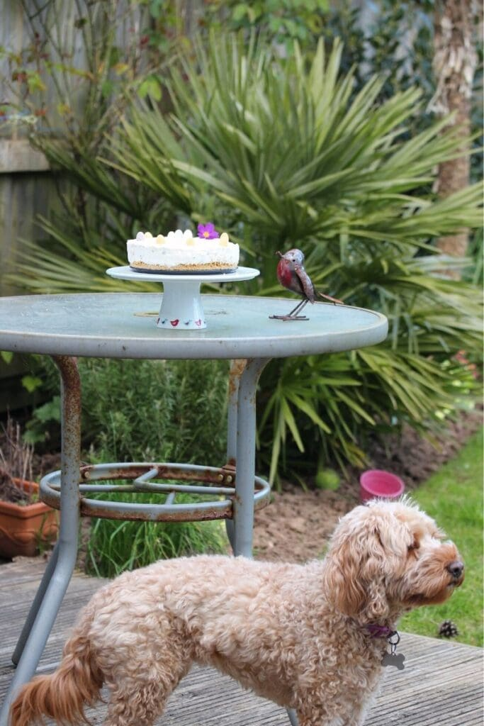 Cockapoo with our delicious Easter dessert. #dog #cutedog #Easterrecipe